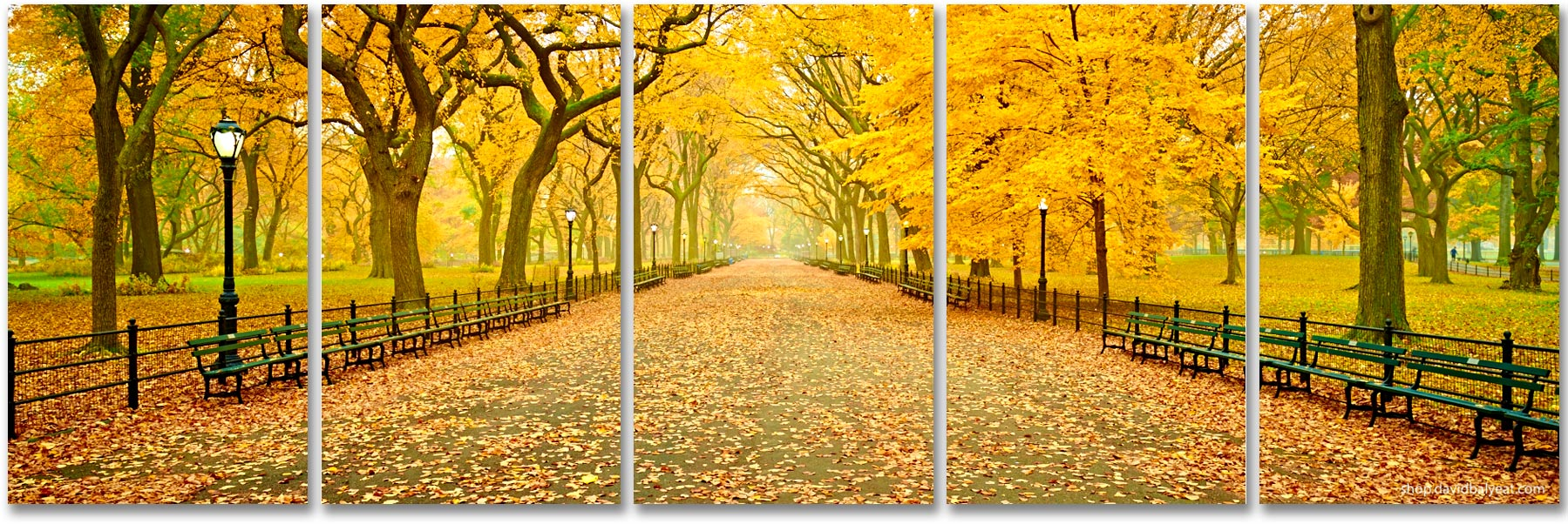 Central Park New York City Autumn Panoramic Fall high-definition HD professional landscape photography