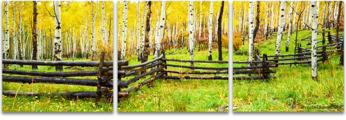 Aspen grove fall split rail rustic fence Colorado panoramic fine art photography