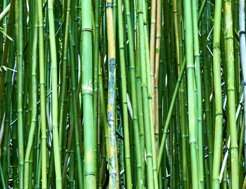 Good Fortune – Bamboo