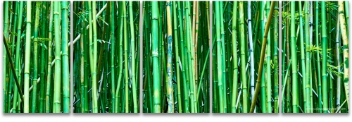 Bamboo forest Hawaii