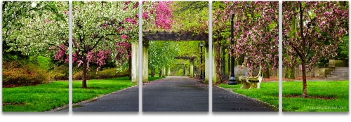 Brooklyn Botanic Garden spring cherry blossoms panoramic photography