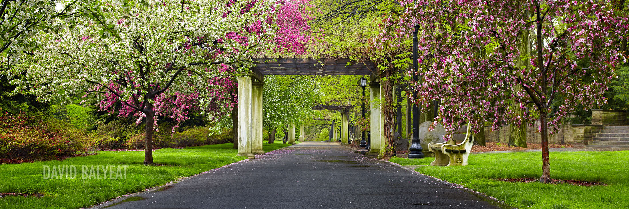 Brooklyn Botanic Secret Garden spring cherry blossoms panoramic photography