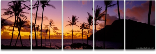 Mokapu'u palm trees silhouette sunrise panoramic Hawaii high-definition HD professional landscape photography