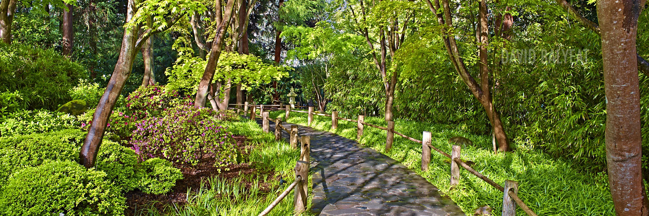 San Francisco Botanical Garden Stroll Zen high-definition HD professional landscape photography