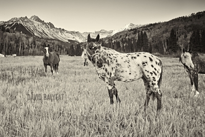 Horses rocky mountain pasture Mount Sneffels San Juan Mountains Colorado sepia