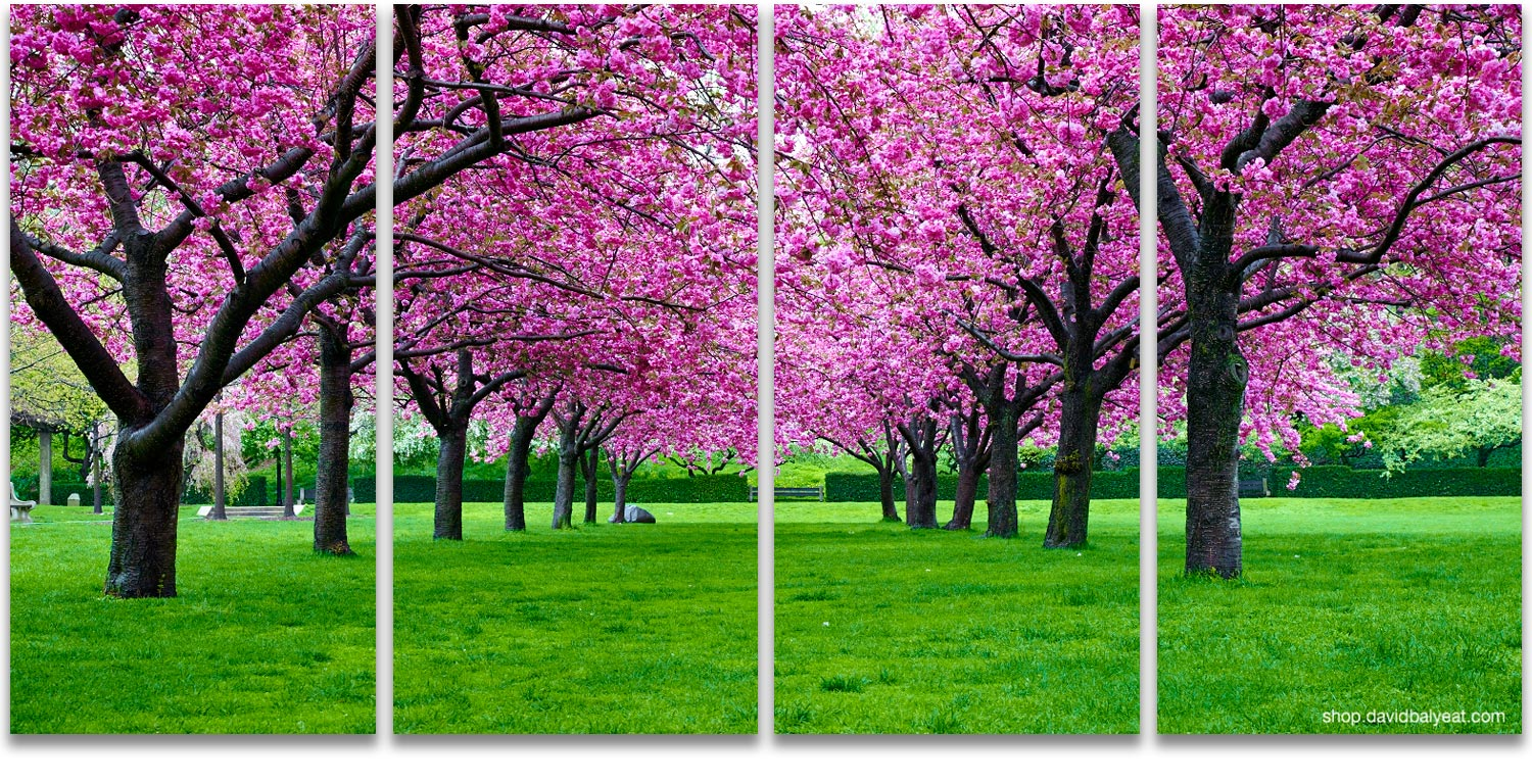 Pink cherry blossoms Brooklyn Botanic Garden David Balyeat photography & Pink Canopy - 4 Panel Artwork u2022 David Balyeat Photography Store