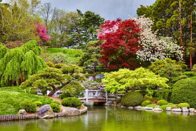 Zen Garden Brooklyn Botanic Garden New York high-definition landscape photography