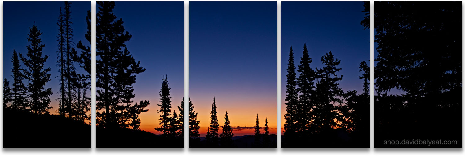 Evergreen trees sunrise silhouette panoramic Rocky Mountain National Park