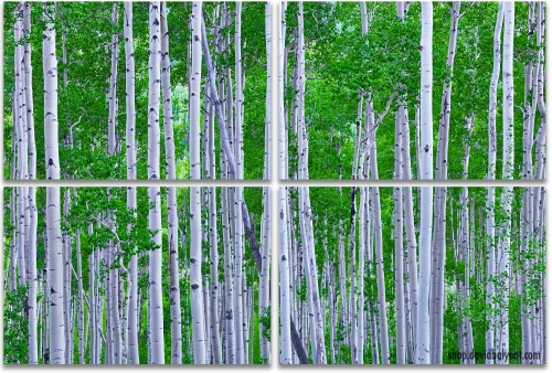 Aspen Trees Colorado summer green 4-panel artwork