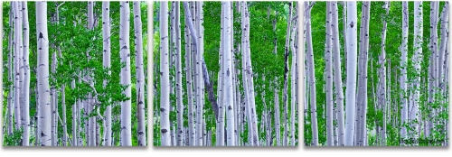 Aspen Trees Colorado summer green panoramic 3-panel artwork