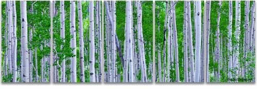 Aspen Trees Colorado summer green panoramic 5-panelartwork