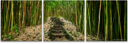 Hana Bamboo forest Haleakala National Park Maui Hawaii 3-panel triptych artwork