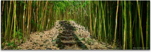 Hana Bamboo forest Haleakala National Park Maui Hawaii artwork